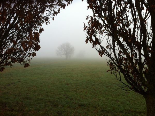 Fog Tree I.