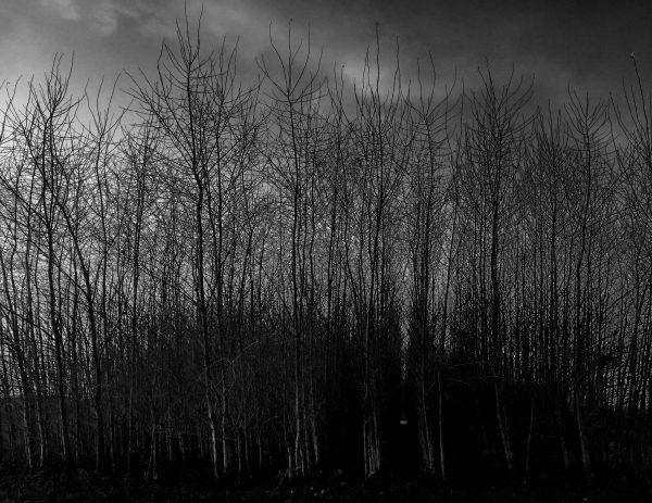 Trees (2016)